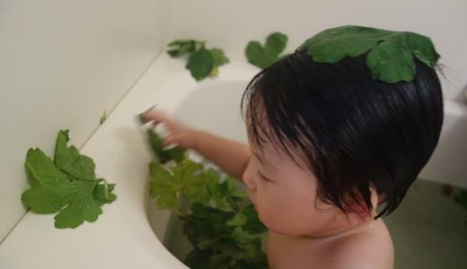 【ゴージャス】ありったけのゴーヤ葉を投入したゴーヤ風呂は子供が喜ぶ!